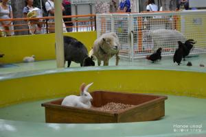 江戸川区自然動物公園、ジャンボうさぎ・ふくちゃん