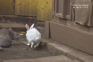 上野動物園のうさぎ、小梅ちゃん