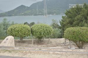 ウサギの島、大久野島山頂のうさぎ