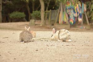 ウサギ島の戦争遺跡