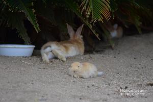 ウサギ用の水入れ