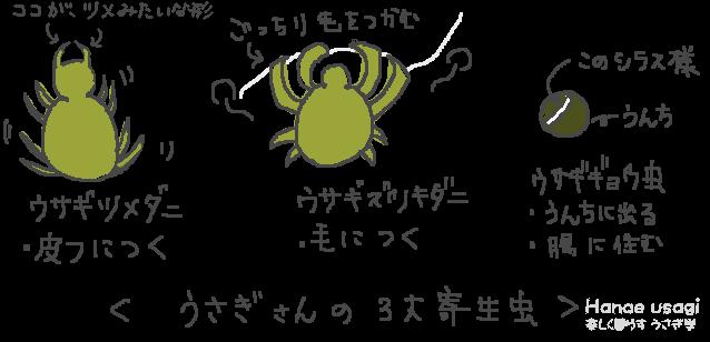 ウサギツメダニ、ウサギズツキダニ、うさぎ蟯虫