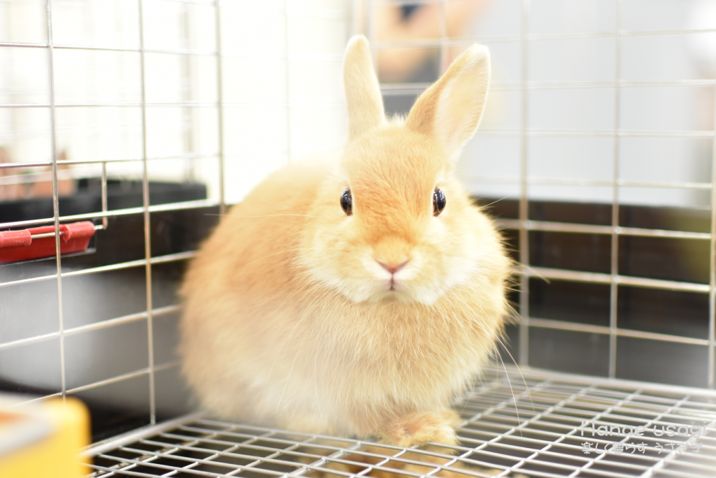 ウサギのストレス耐性