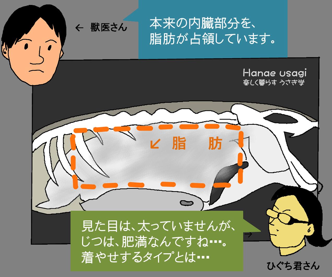 うさぎの内臓脂肪