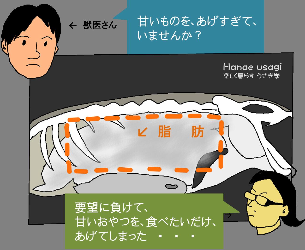 内臓脂肪のレントゲン